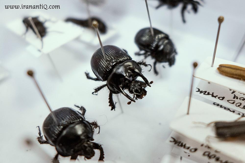 سوزن زدن به حشرات