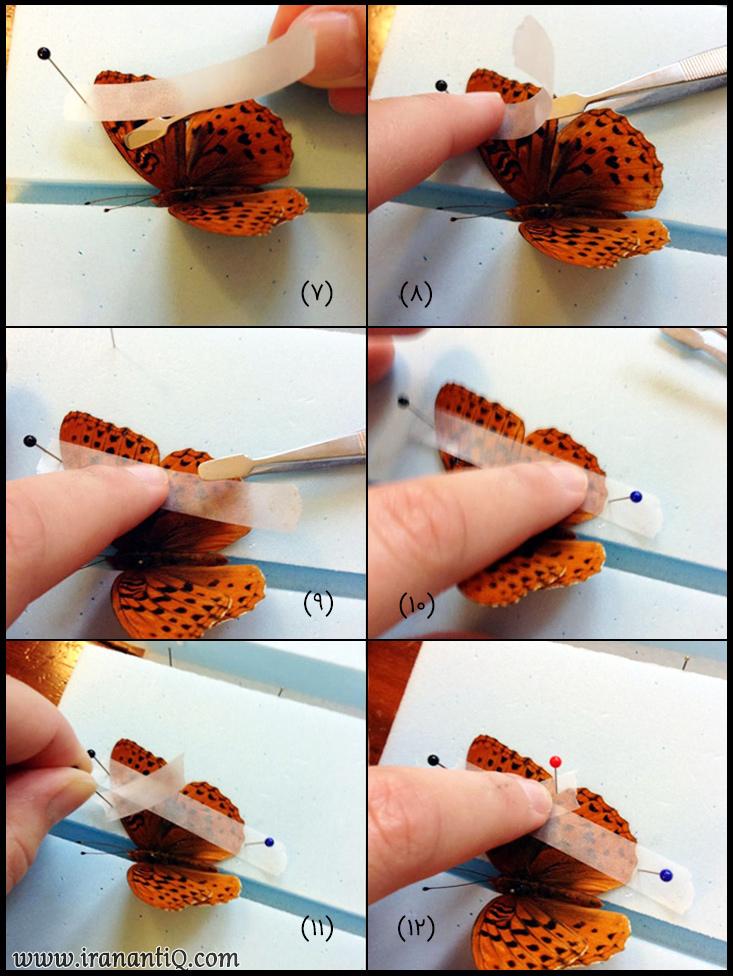 مراحل اتاله کردن پروانه ، تصویر شماره 2