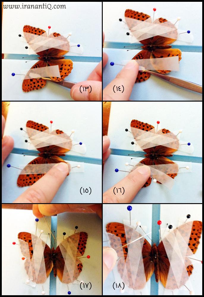 مراحل اتاله کردن پروانه ، تصویر شماره 3