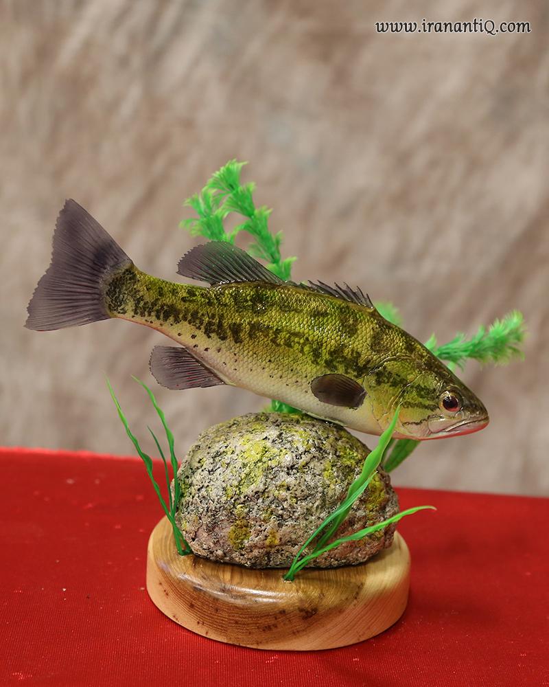 ماهی تاکسیدرمی شده