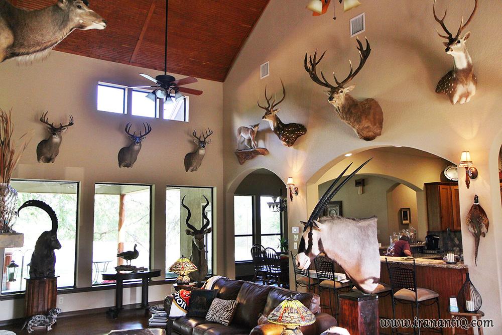 اتاقی مملو از شکار تروفه